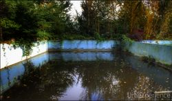 Overgrown swimming pool